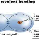HH Nonpolar Covalent Bonds
