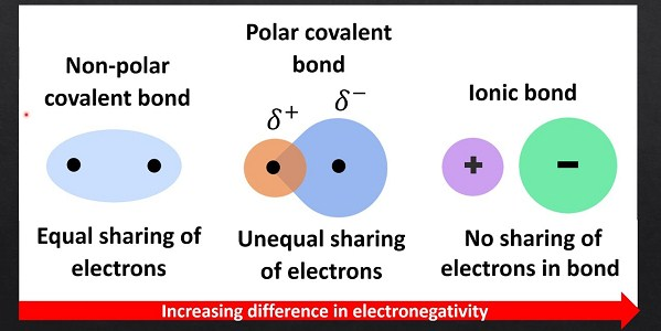 Polar And Nonpolar Covalent Bonds Definitions Molecules And Examples
