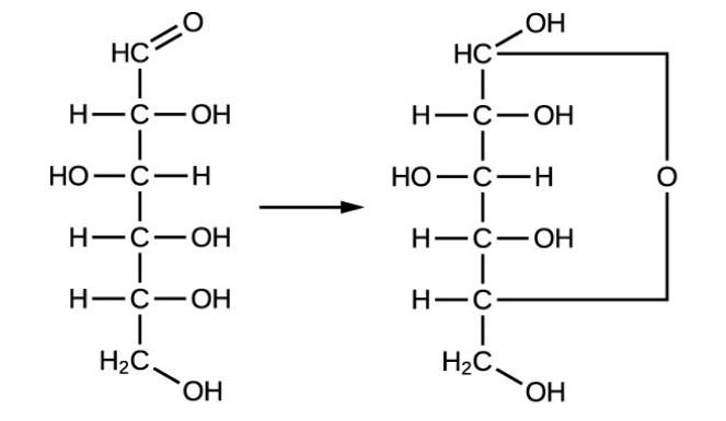 Glucose Is Monosaccharides