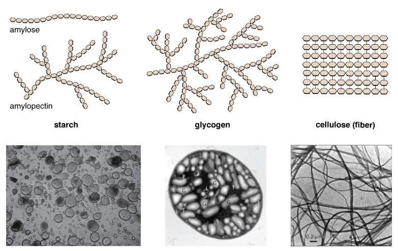 Polysaccharides