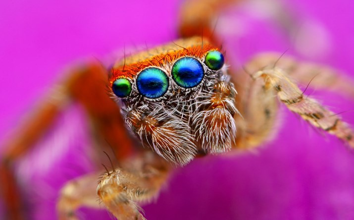 How Many Legs Does A Spider Have