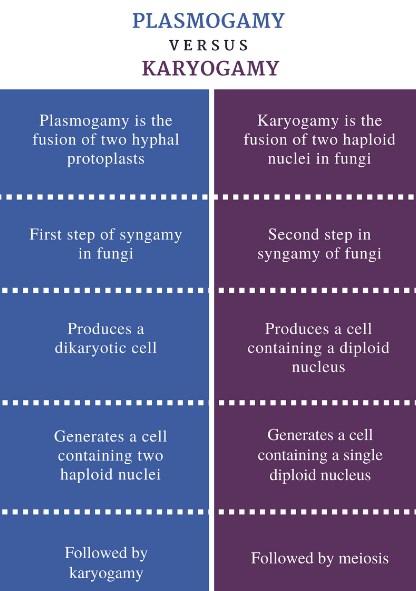 Plasmogamy vs Karyogamy