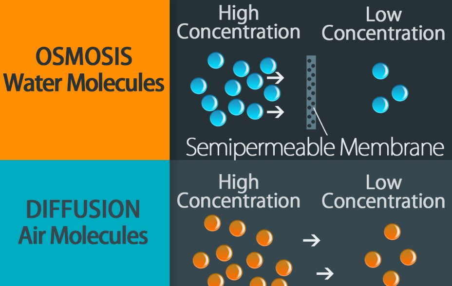 Diffusion VS Osmosis